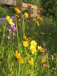 Beautiful Flowers Along Fence
