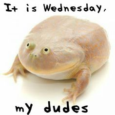 It is Wednesday my Dudes - Funny Minions Memes Amphibians, Reptiles, Lizards, Frogs For Sale, Pacman Frog, Reptile Supplies, Net Neutrality, Cute Frogs, Paludarium