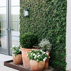 Landscaping Ideas Videos Rustic - - - Simple Landscaping Front Yard Budget House - - Small Garden Landscaping Ideas Tips Small Backyard Landscaping, Backyard Patio, Backyard Ideas, Patio Ideas, Mulch Landscaping, Patio Planters, Garden Pool, Diy Patio, Back Yard Ideas Diy
