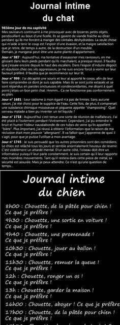 Journal Intime du Chat et du Chien - Funny Texts, Funny Jokes, Hilarious, Slogan Tshirt, Let's Have Fun, Sad Quotes, I Laughed, Quotations, Dog Cat