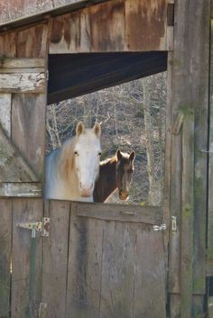 Horses on a farm on Cove Lick, Lewis County, West Virginia by Sherry Post