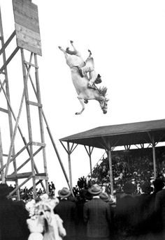 Amazing Horse Stunt Dive Art Print by Underwood Archives. All prints are professionally printed, packaged, and shipped within 3 - 4 business days. Choose from multiple sizes and hundreds of frame and mat options.