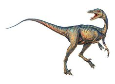 Troodon. The world's smartest dinosaur.