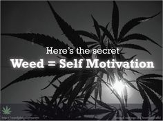 #Weed Quotes