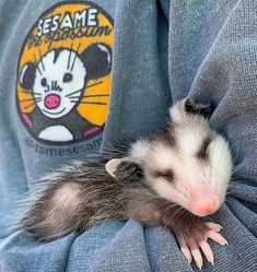 Animals And Pets, Baby Animals, Funny Animals, Cute Animals, Baby Possum, In This World, Opossum, Little Critter, Freundlich