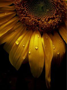 """My Only Sunshine"" by Sarah Jane C. (http://jupiterlily.deviantart.com/)"