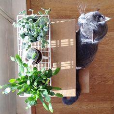 Chez vous: les plantes, décoration végétale , plantes dans une panière en acier
