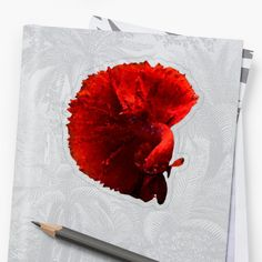 The Betta fish is a symbol for independence and the defiant spirit, warrier energy, deep knowledge and creativity. The male Betta is extremely territorial and lives most of it's life in solitude. Siamese Fighting Fish, Betta Fish, Low Poly, Transparent Stickers, Solitude, Finding Yourself, Creativity, Knowledge, Spirit