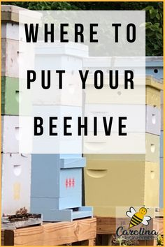 Finding the best location for your bee hive is very important. The health of your bees depends on choosing the best hive placement. This guide will help you consider the most important aspects of beehive location... #beginnerbeekeeping #beehiveplacement #carolinahoneybees