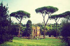 Palatine Hill : Rome