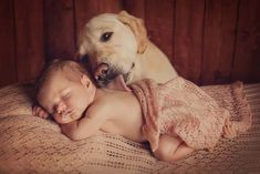 Introductions Between Newborns and Dogs Newborn And Dog, Newborn Sibling, Newborn Baby Photos, Newborn Pictures, Dogs And Kids, Baby Belly, Dog Photography, Dog Owners, New Baby Products