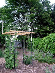 vertical garden Best Easy Low Budget DIY Squash Arch Ideas for Garden Vegetable Garden Design, Diy Garden, Garden Beds, Vegetable Gardening, Gardening Tips, Vertical Vegetable Gardens, Kitchen Gardening, Texas Gardening, Potager Garden
