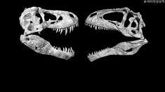 Giganotosaurus vs T. rex, who is the deadliest predator? - Quora T Rex, Predator, Lion Sculpture, Tyrannosaurus Rex, Statue, Sculptures, Sculpture
