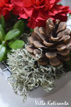 Jouluinen kukka-asetelma vanhaan kakkuvuokaan / Beautiful, Christmas flower arrangement, created into an old cake tin Christmas Table Settings, Coconut Flakes, Christmas Home, Flower Arrangements, Vegetables, Flowers, Beautiful, Floral Arrangements, Vegetable Recipes