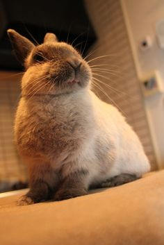 Miffy the disapproving bunn