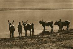 057. Pe Dunare la Potelu Romania People, Old Photography, Moose Art, Costume, Traditional, Animals, Inspiration, Europe, Artists