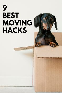 A Wedding Storage Unit: 6 Reasons Why It Might Be a Good Idea from Burgh Brides Moving Home, Moving Day, Moving Tips, Moving Hacks, Innsbruck, Moving House Checklist, Dog Jokes, Apartment Guide, Apartment Living