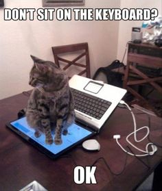 You didn't say a thing about this!!!!!!!!@@@@@@@    Dump A Day Funny Animal Pictures - 45 Pics