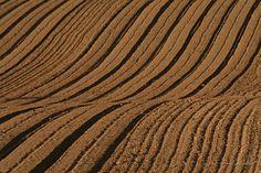 Fields - texture.