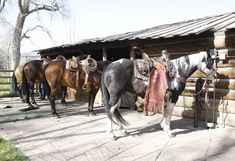 A ranch isn't complete without a stable filled with horses! The Double RL Ranch is still an operating ranch, complete with cowboys and dogs herding the animals. Ralph also enjoys riding across the scenic expanse.