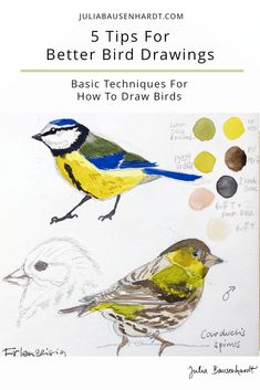 Since I'm focusing on how to draw birds in my upcoming free online workshop, I wanted to take a look at five quick tips for better bird drawings today. Bird Drawings, Animal Drawings, Cool Drawings, Drawing Birds, Watercolor Bird, Watercolor Paintings, Watercolor Portraits, Watercolor Landscape, Abstract Paintings