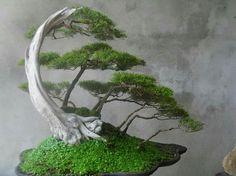 Un día quiero hacer crecer un bonsái como éste