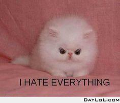 Kitten, U angry?