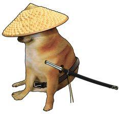 Doge Dog, Doge Meme, Animal Jokes, Funny Animals, Cute Animals, Funny Images, Funny Photos, Funny Profile Pictures, Cute Memes
