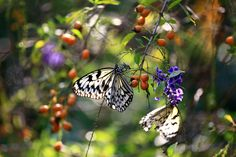 Photograph Butterfly Season by yume . on 500px