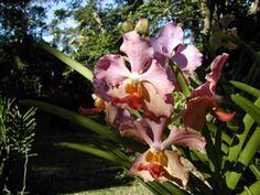 Photo Jardin des Orchidées à Saint-Joseph île de La Réunion