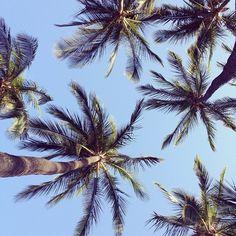 Palmeras, palms, tropical