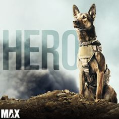 """While the United States Air Force has helped many military working dogs return to U. soil, there has never before been a """"Leave No Dog Behind Military Working Dogs, Military Dogs, Marine Military, Mans Best Friend, Best Friends, Max Movie, Dog Films, Hachiko, Dog Information"""