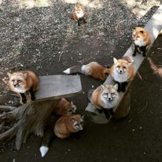 Zao Fox Village, Japan | 19 Places Animal Lovers Should Visit Before They Die