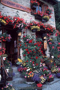 Swiss are such hard-working gardeners, my husband included. The Swiss are such hard-working gardeners, my husband included. Beautiful World, Beautiful Gardens, Beautiful Places, Beautiful Pictures, Love Flowers, Beautiful Flowers, Potted Flowers, Swiss Chalet, Zermatt
