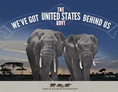 The United States makes a bold move for Africa's wildlife with the release of its plan to Combat Wildlife Trafficking
