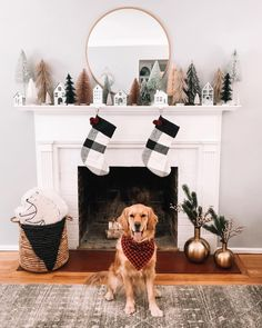 Dear Santa All I Want For Christmas Is To Be A Target Doggy Model Love Emmy In 2020 Target Christmas Decor Target Christmas Magnolia Christmas Decor