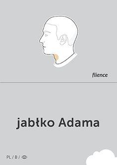 Jabłko Adama #CardFly #flience #human #polish #education #flashcard #language