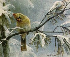 Robert Bateman Female Cardinal