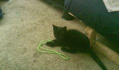 Is this how I cat? http://ift.tt/2lIBPpH