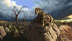 Hoplophoneus is a 35 million-year-old nimravid, a group of mammals that are closely related to cats but not cats themselves.