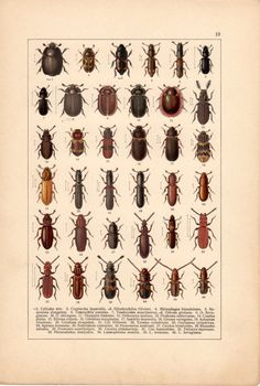 Colorful Bark Beetles Antique Print Vintage by Craftissimo on Etsy, €12.00