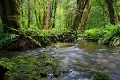 Fern-lined rivers abound in Marysville, Victoria. See more on the many walking trails in the Visit Marysville App.  www.marysvilletourism.com/visit-marysville-apps Marysville Victoria, Vibe Hotel, Yarra Valley, Day Trip, Fern, Ranges, Rivers, Botanical Gardens, Perfect Place