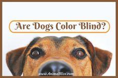 Free Image on Pixabay - Dog, View, Sweet, Animal Portrait Sweet Animal, Great Dog Names, Education Canine, Cute Dog Photos, Pet Odors, Pet Urine, Dog Training Tips, Rottweiler, Dog Care
