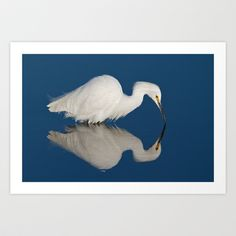 Look! Photography 's store featuring unique designs on various products across art prints, tech accessories, apparels, and home decor goods. Reflection Art, Art Prints, Photography, Animals, Design, Art Impressions, Photograph, Animales, Animaux
