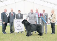 #Bath championship show - Dog World #dogs #dogshows #dogshowing