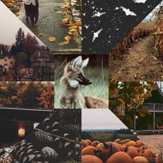 Autumn Moodboard Adopt (PENDING) by Aviatrs on DeviantArt