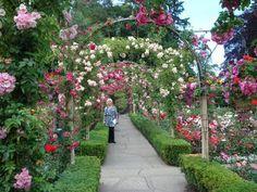 Butchart Gardens Canada....2010. Rose Garden.