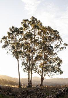 Kara Rosenlund - Tasmania in Pictures Kara Rosenlund, Scenery Photography, Night Photography, Working Holidays, Australian Bush, Farm Stay, All Nature, Travel Alone, Paisajes