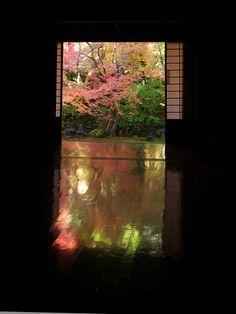 Yuka-momiji at Jissou-in temple, Kyoto, Japan