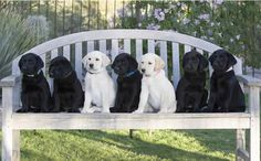Puppy Program - Canine Companions for Independence